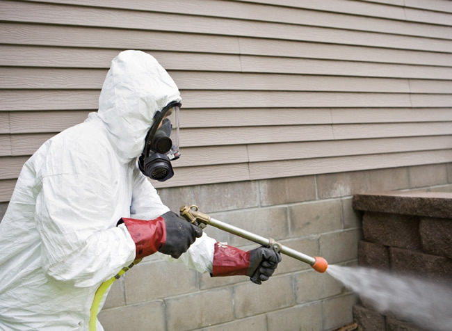 Best Considerations When Looking For Extermination Experts