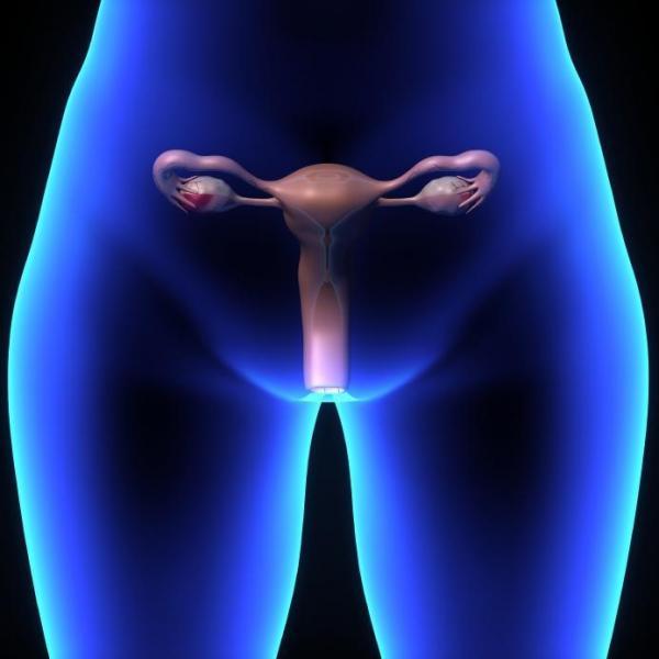 жен пол органы фото